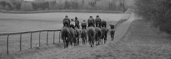 Racehorses exercise on the gallops at Thorndale Farm